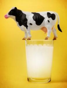 mleko_krowie