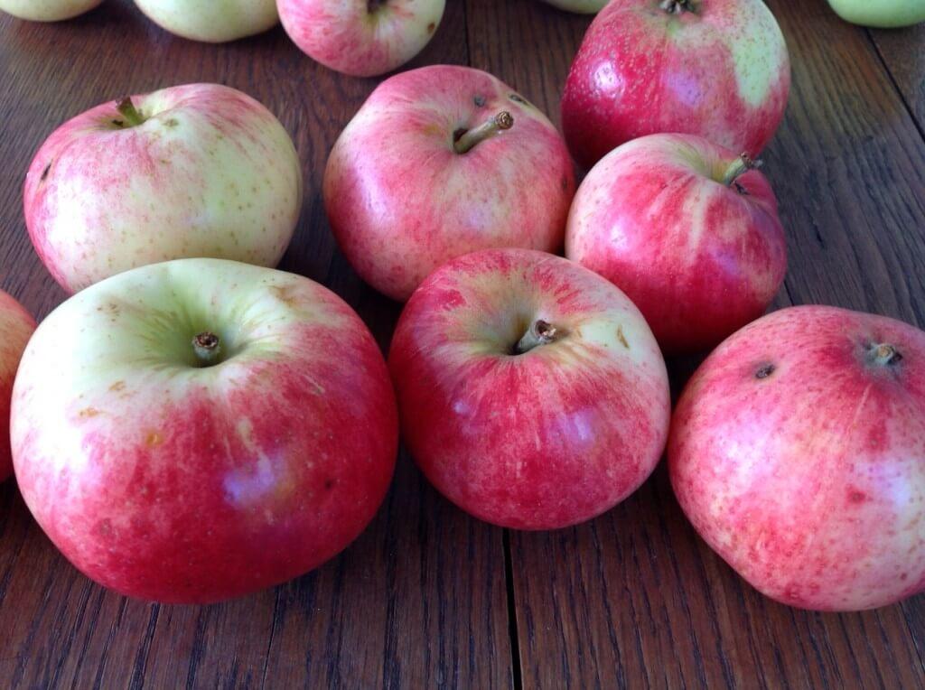 przepisy jabłka Katarzyna