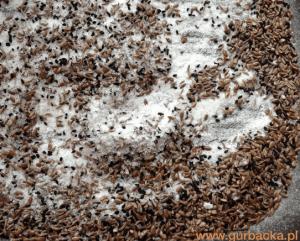sol_odkwaszajaca organizm przepis