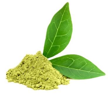 ekstrakt z zielonej herbaty