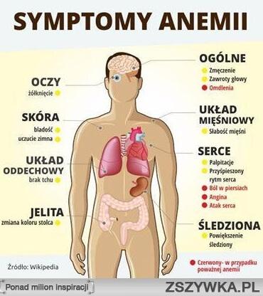 objawy anemii