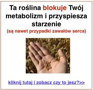 pszenica_baner_1