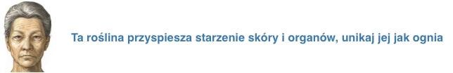 stara_pszenica