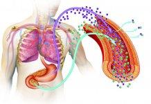 błonnik pokarmowy chroni przed cukrzycą